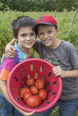 Two boys with the fresh tomatoes that they have just picked