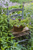 Chair in a garden with plants