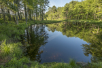 The East Branch of the Swift River in Petersham, MA