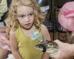 Little girl looking at a baby alligator