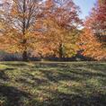 Autumn in Woodstock, Vermont