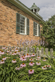 Flowers growing along side the Vergennes Schoolhouse at the Shelburne Museum