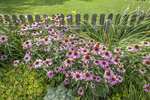 Flowers growing at the Shelburne Museum