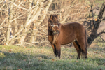 A mini horse in the grassy field in the late afternoon