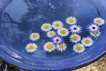 Flowers arranged in a round bird bath