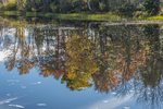 Reflection of autumn leaves in the Millers River near the Birch Hill Dam