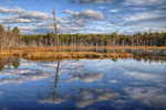 A beaver pond in the Birch Hill Dam area