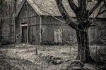 Old red barn in Petersham, MA in black and white