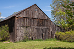 Old barn in Hadley, MA