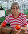 A woman packing tomatoes to sell at a food pantry
