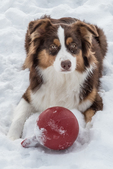 An Aussie taking a break from playing in the snow