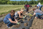 Farm workers planting vegetable plants