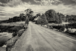 A dirt road on Westport Island, Maine