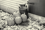 Pumpkins on the front steps with a little bit of snow on them