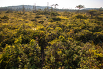 A bog in the early morning at the Boot Head Preserve in Lubec, Maine