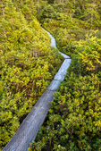 A path through a bog at the Boot Head Preserve in Lubec, Maine