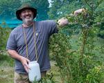 Man picking blueberries