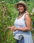 Woman picking blueberries