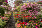 A very colorful spring greenhouse