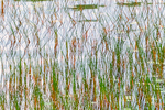 An abstract image of grass at the waters edge at a pond at Gate 33, Quabbin Reservoir in New Salem, MA