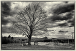 A maple tree atop a hill at the now closed Fernald School in Templeton, MA, Mt Monadnock in the background on a stormy day in early spring.