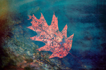 Oak leaf in a pond - edited