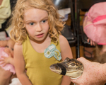 A young girl learning about baby alligators at Fruitlands Museum