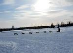 Dog Mushers - Fairbanks, Alaska practice track