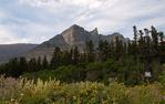 Many Glacier Wildflowers Glacier National Park