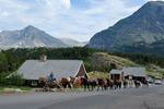 Trail ride horses @ Many Glacier Glacier Nat. Park