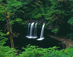 LF 439.  Upper Butte Creek Falls at early monring with overcast skies.  Santiam State Forest, OR, USA