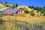SF 174.  A pair of fading red barns at late summer in the Anderson Valley, Mendocino County, Ca