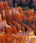 MF 216.  The canyons of Bryce Canyon National Park at sunrise, UT