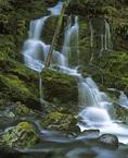 MF 367.  Unmarked waterfall in the Opal Creek Wilderness, OR