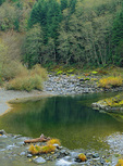 LF 300.  A docile section of Quartz Creek, wild and scenic river, OR