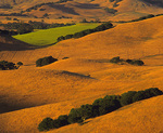 MF 294.  Sunset across the rolling hills of the Chileno Valley at late summer.  Marin County, CA