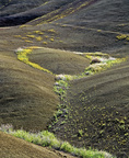 MF 92.  A convuluted corner of the Painted Hills replete with bee flowers.  John Day Fossil Beds National Monument, OR