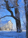 SF 2157.   Hoar frost and snow encase cottonwoods and barn in rural Iowa. Cass County, Iowa