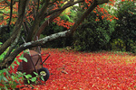 SF 6.  A carpet of fall maple leaves.  Multnomah County, OR