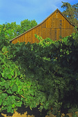 SF 270.  A barn behind a vineyard row in Dry Creek Valley, Sonoma County, CA