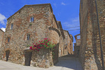 D3X 18. A trellis of roses in the hilltop village of Belforte, Tuscany, Italy