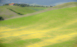 D3X 47.  A mixed field of buttercups and grasses at middle spring in the Tuscan countryside.  Tuscany, Italy