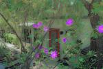 SF 23 PI.  Bougainvillea frames a home and garden in rural Ventura County, CA