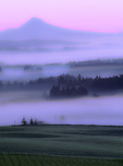 SF 415 PI.  Mt. Hood and fog at dawn from the summits of a  Wasingtion County, Oregon vineyard.