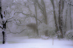 SF 2131 PI.  A snowstorm within a clearing of Hendrick's Park.  Eugene, OR