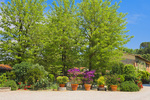 D3X 166.  A mixture of landscaping at a villa near Alberi, Tuscany, Italy