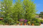 D3X 166.  A mixture of landscaping at a villa near Alberi, Tuscany, Italy