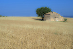 D800e 15 PI.  A centuries old farmhouse surrounded by a field of wheat on the Plateau de Valensole.  Alpes-de-Haute, Provence, France.
