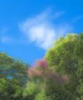 D800e 43 PI.  Smoke Bush amonst a brace of trees.  St. Remy de Provence, France