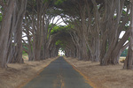 D800e 97.  The RCA Building, circa 1929, and its cypress lined driveway.  Pt. Reyes National Park, CA